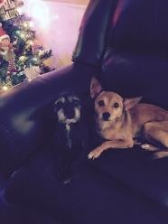 Sister & Jasper