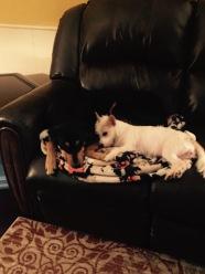 Roxie & Little Bit