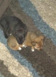 Gretchen & Jasper